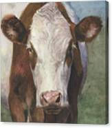 Portrait Of A Cow Iv Canvas Print