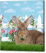 Portrait Of A Gregarious Brown Bunny Canvas Print