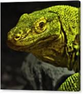 Portrait Of A Komodo Dragon Canvas Print