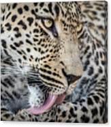 Portrait Of A Leopard Canvas Print