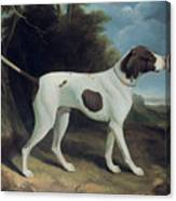 Portrait Of A Liver And White Pointer Canvas Print