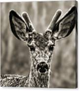 Portrait Of A Male Deer II Canvas Print