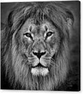Portrait Of A Male Lion Black And White Version Canvas Print