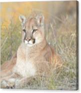 Portrait Of A Mountain Lion Canvas Print
