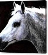 Portrait Of A Pale Horse Canvas Print