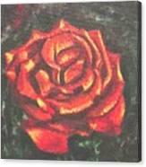 Portrait Of A Rose 2 Canvas Print