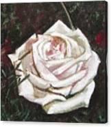 Portrait Of A Rose 3 Canvas Print