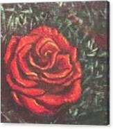 Portrait Of A Rose 4 Canvas Print