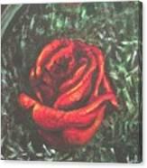 Portrait Of A Rose Canvas Print