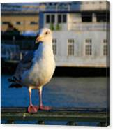 Portrait Of A Seagull Canvas Print
