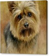 Portrait Of A Silky Terrier Canvas Print