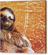 Portrait Of A Sloth Pet Looking In The Camera Canvas Print