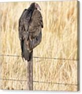 Portrait Of A Vulture Canvas Print