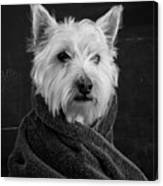 Portrait Of A Westie Dog 8x10 Ratio Canvas Print