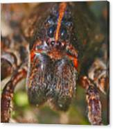 Portrait Of A Wolf Spider Canvas Print