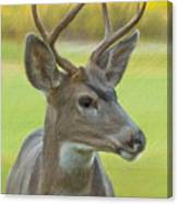 Portrait Of A Young Buck Canvas Print