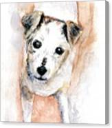 Portrait Of Abby - Jack Russell Terrier Canvas Print