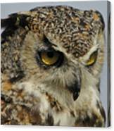 Portrait Of An Owl.  Canvas Print
