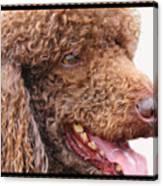 Portrait Of Guinness Canvas Print