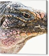 Portrait Of Iguana Canvas Print