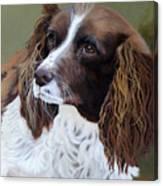 Portrait Of Jesse - Springer Spaniel Canvas Print