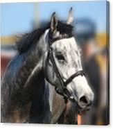 Portrait Of The Grey Race Horse Canvas Print