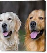 Portrait Of Two Young Beauty Dogs Canvas Print