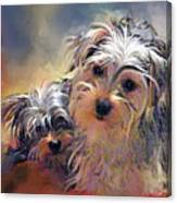 Portrait Of Yorkshire Terrier Puppy Dogs Canvas Print