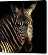 Portrait Of Zebra Canvas Print