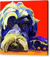 Portugese Water Dog 1 Canvas Print