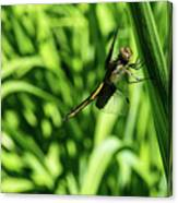 Posing Dragonfly 2 Canvas Print