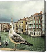 Posing For Tourists Canvas Print