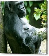 Posing Gorilla Canvas Print