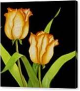 Posing Tulips Canvas Print