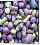 Potato Fest Canvas Print