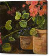 Pots Of Geraniums Canvas Print