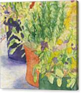 Potted Beauties  Canvas Print