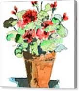 Potted Geraniums Canvas Print