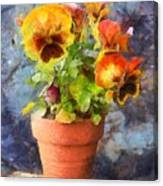 Potted Pansy Pencil Canvas Print
