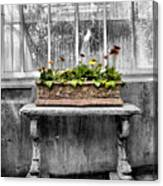 Potted Canvas Print
