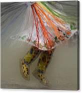 Pow Wow Shawl Dancer 4 Canvas Print