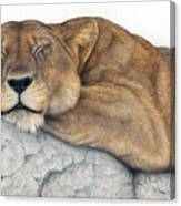 Power And Grace At Rest Canvas Print