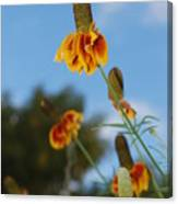 Prairie Cone Flowers Against Blue Sky Vertical Number One Canvas Print