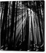Prairie Creek Redwwod State Park  Canvas Print