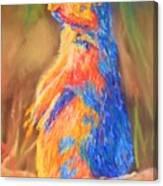 Prairie Dog 1 Canvas Print