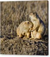 Prairie Dog Couple Canvas Print