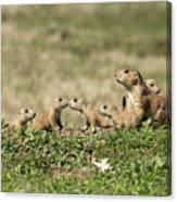 Prairie Dog Family 7270 Canvas Print