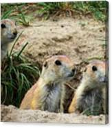 Prairie Dog Family Canvas Print