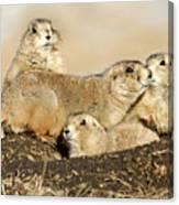 Prairie Dog Family Portrait Canvas Print