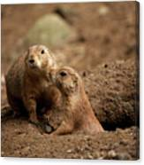 Prairie Dogs Canvas Print